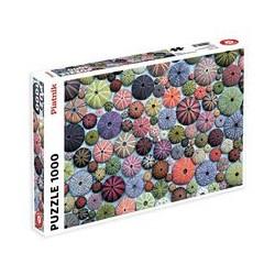 Puzzle 1000 pièces - Oursins